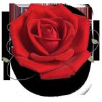 rosa-Fantasy